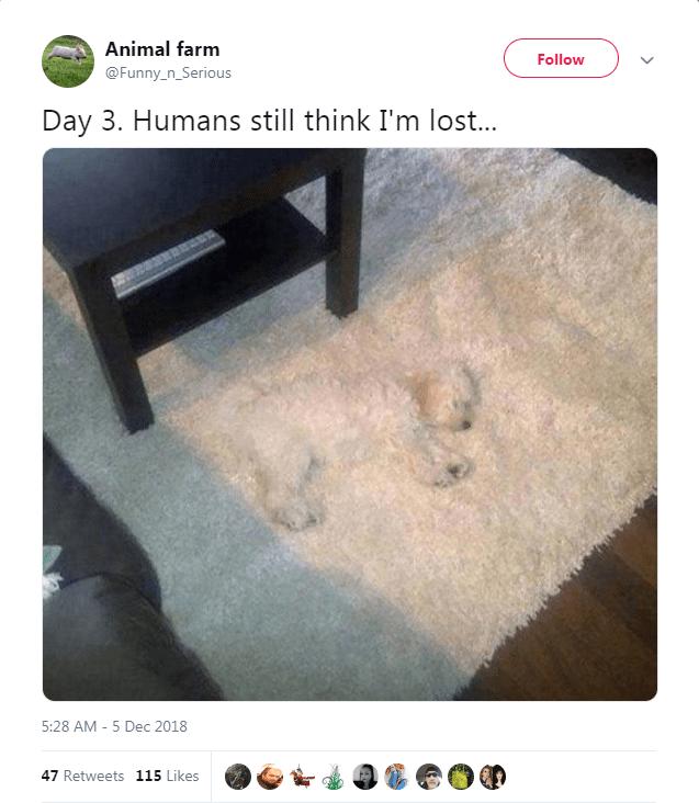 Floor - Animal farm Follow @Funny_n_Serious Day 3. Humans still think I'm los... 5:28 AM - 5 Dec 2018 47 Retweets 115 Likes