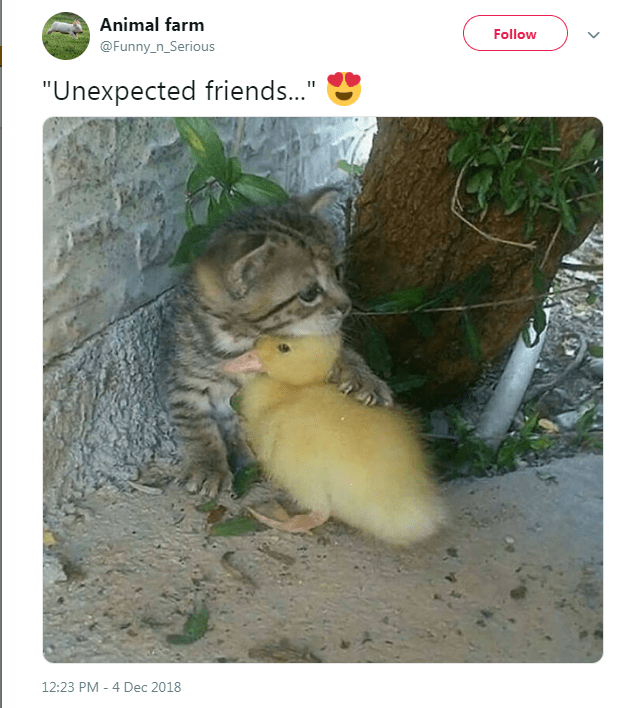 """Adaptation - Animal farm Follow @Funny_n_Serious """"Unexpected friends.."""" 12:23 PM 4 Dec 2018"""