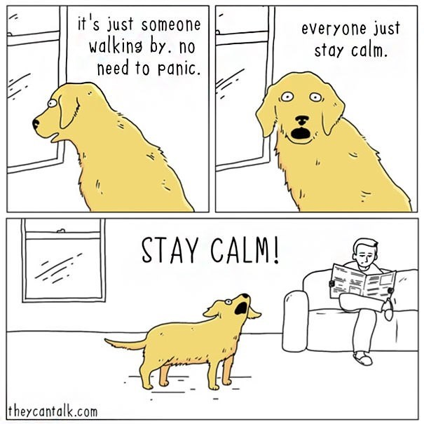 Canidae - it's just someone walking by. no need to panic. everyone just stay calm. STAY CALM! theycantalk.com