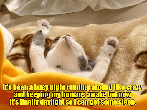 cat meme - Photo caption - It's been a busy night running around like crazy and keeping my humans awake but now it's finally daylight so I canget some sleep.