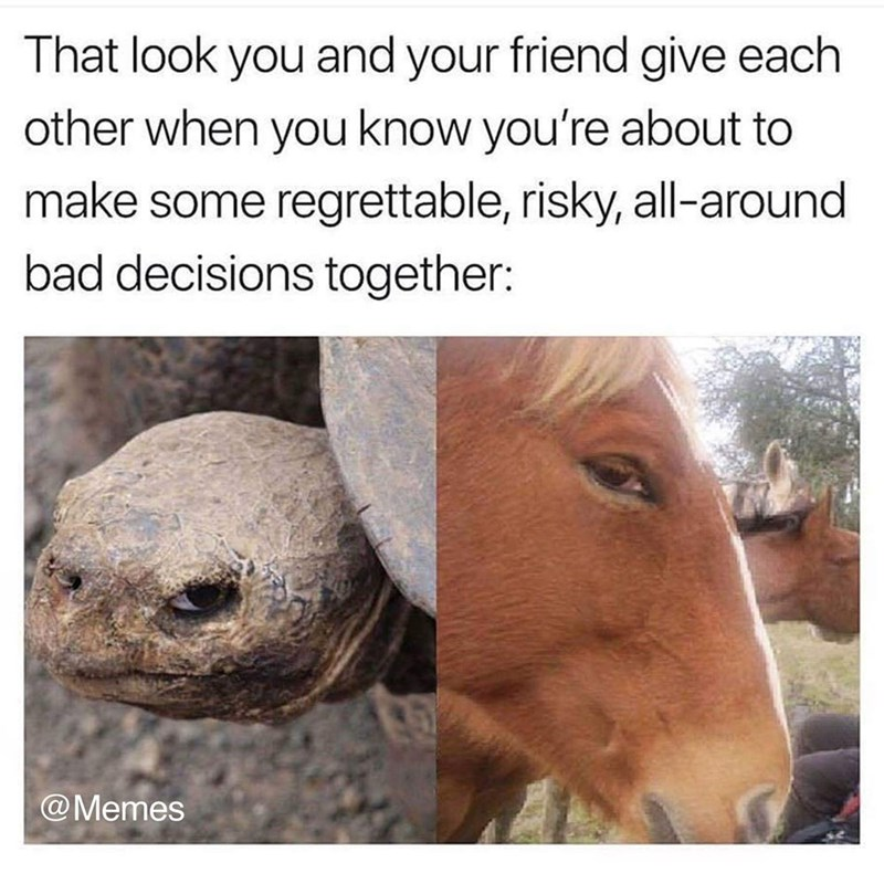 meme about you and a friend getting in trouble together with pictures of horse and turtle appearing to look at each other from the corner of their eyes