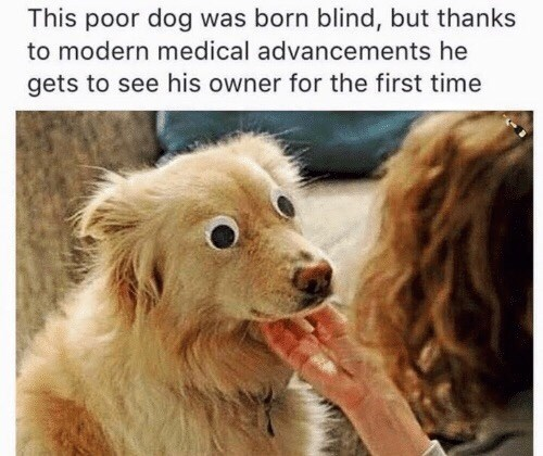 """meme parodying medical miracle stories with picture of """"blind"""" dog seeing through fake googly eyes"""