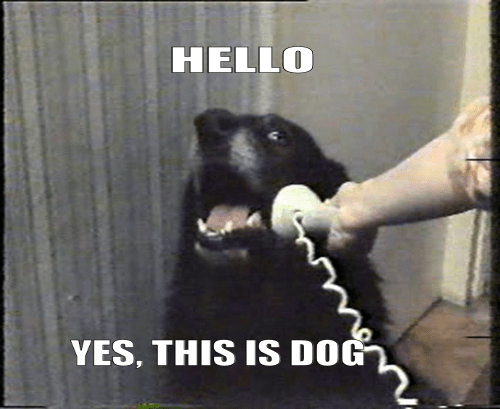 dog accepting phone call while the handset is being held to its ear by human hand