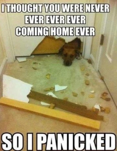 meme about dog destroying house because it thought its owner isn't coming back