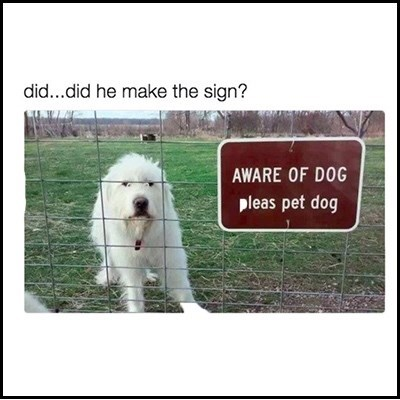 "Caption that reads, ""Did...did he make the sign?"" above a pic of a white dog behind a sign that reads, ""Aware of dog - please pet dog"""