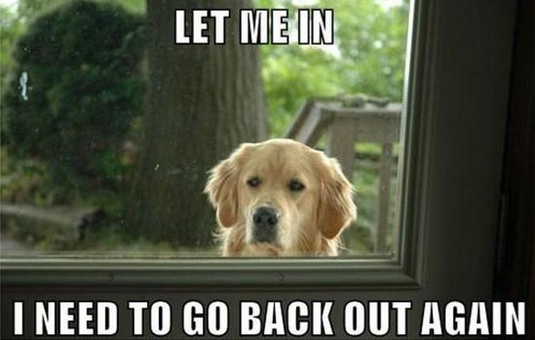 funny meme about dogs not knowing if they want to stay out or come inside