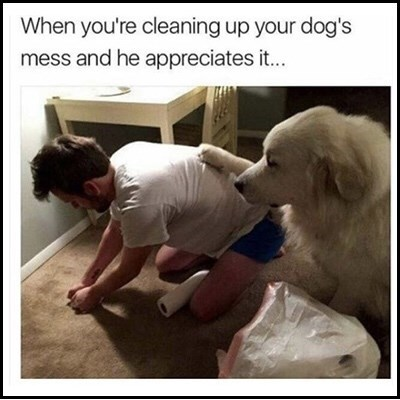 meme about dog thanking you for cleaning after it with picture of dog putting its paw on its owner's back while he's scrubbing the carpet