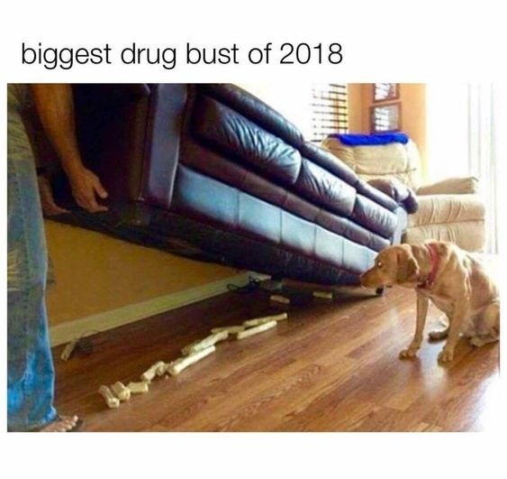 meme about lifting the couch and discovering the dog's toy stash