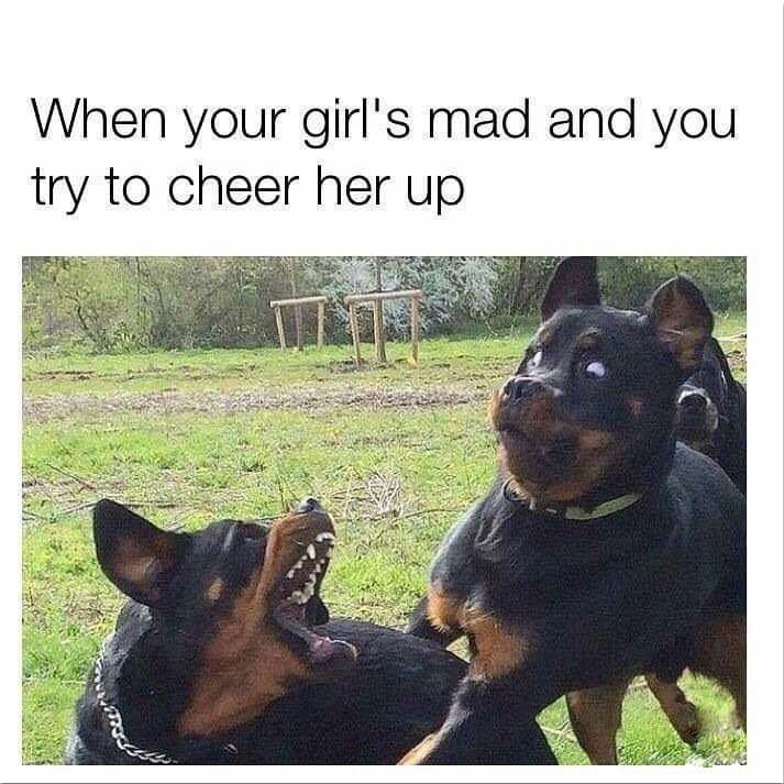 meme about cheering your angry girlfriend up with picture of dog looking scared when another dog barks at it