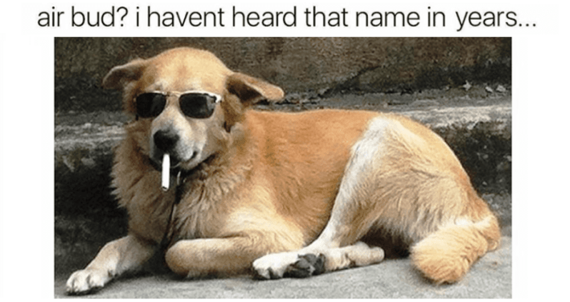 "Caption that reads, ""Air Bud? I haven't heard that name in years..."" above a pic of a dog with sunglasses on appearing to smoke a cigarette"