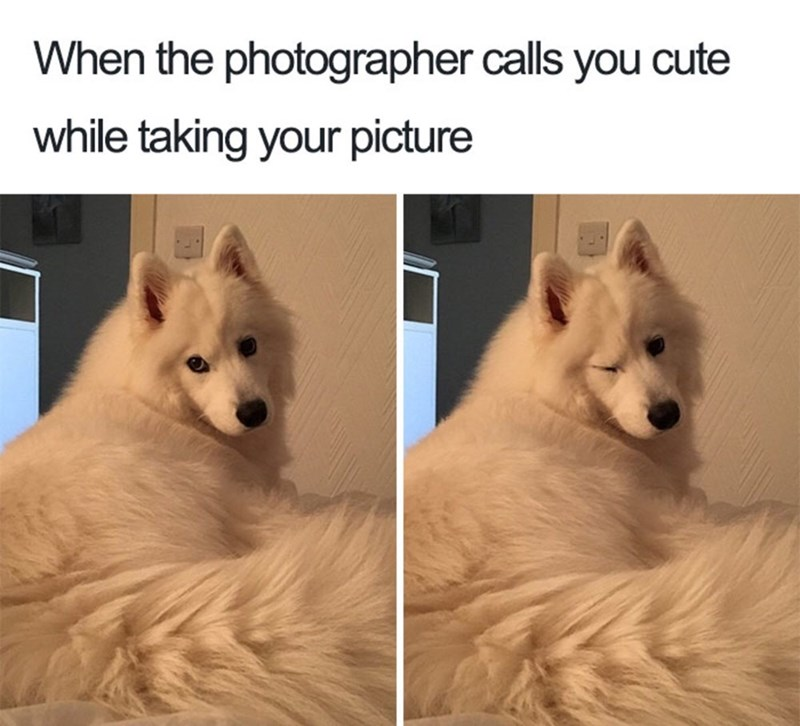 meme about playing for the camera with picture of fluffy dog winking