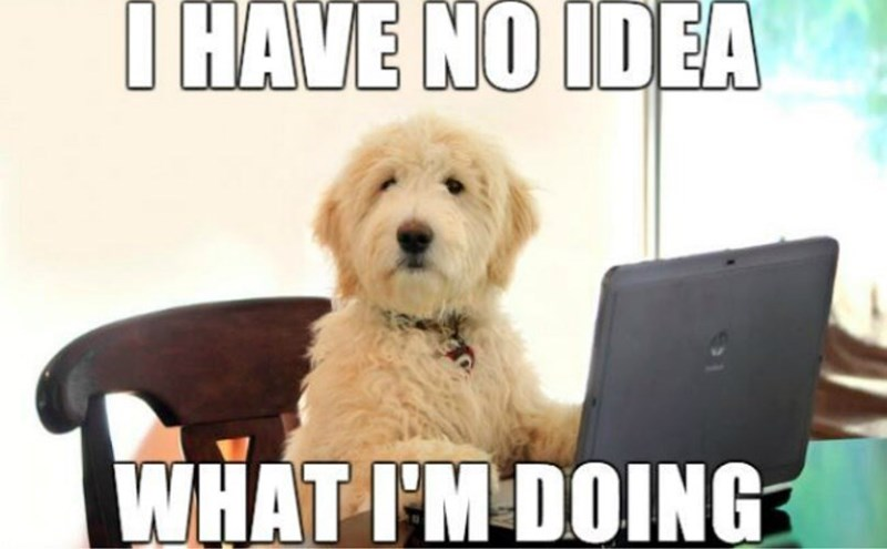 meme about being confused with picture of dog sitting in front of laptop