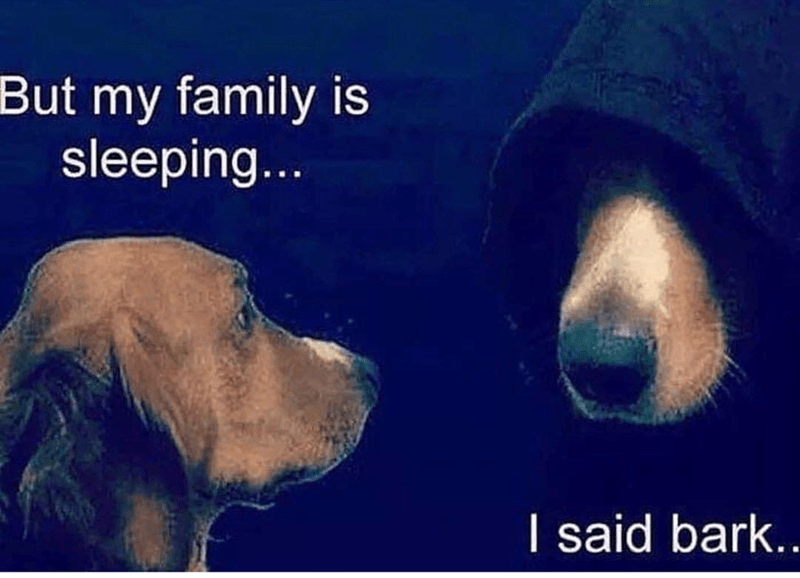 dark Kermit meme replaced with dog telling itself to bark while owners are sleeping
