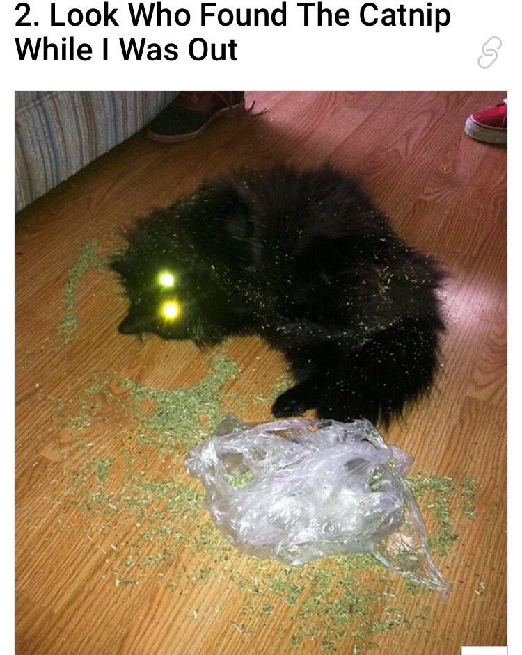 """Caption that reads, """"Look who found the catnip while I was out"""" above a pic of a cat with laser eyes lying next to a bag of catnip"""