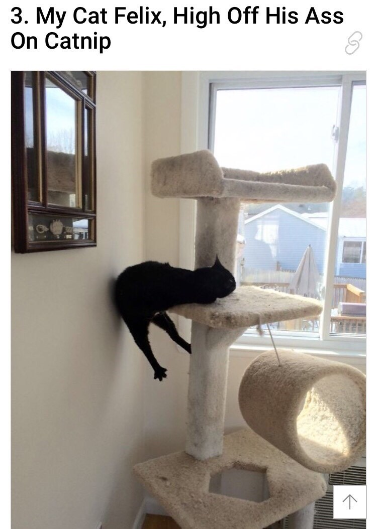 """Caption that reads, """"My cat Felix, high off his ass on catnip"""" above a pic of a cat appearing to fall off of his cat tree"""