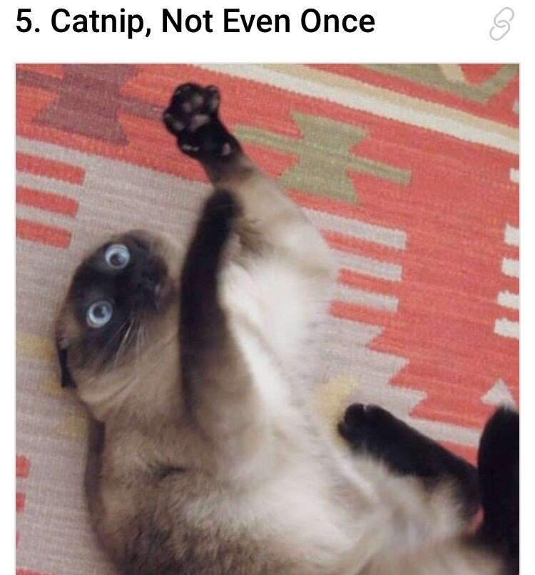 meme about a cat going crazy after smelling catnip