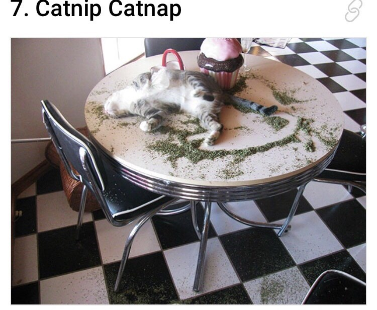 catnip all over a table and a cat is spread across on the table