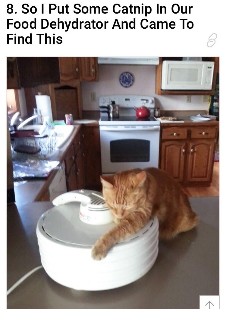 cat hugging a food dehydrator that has catnip in it and a cat is freaking out