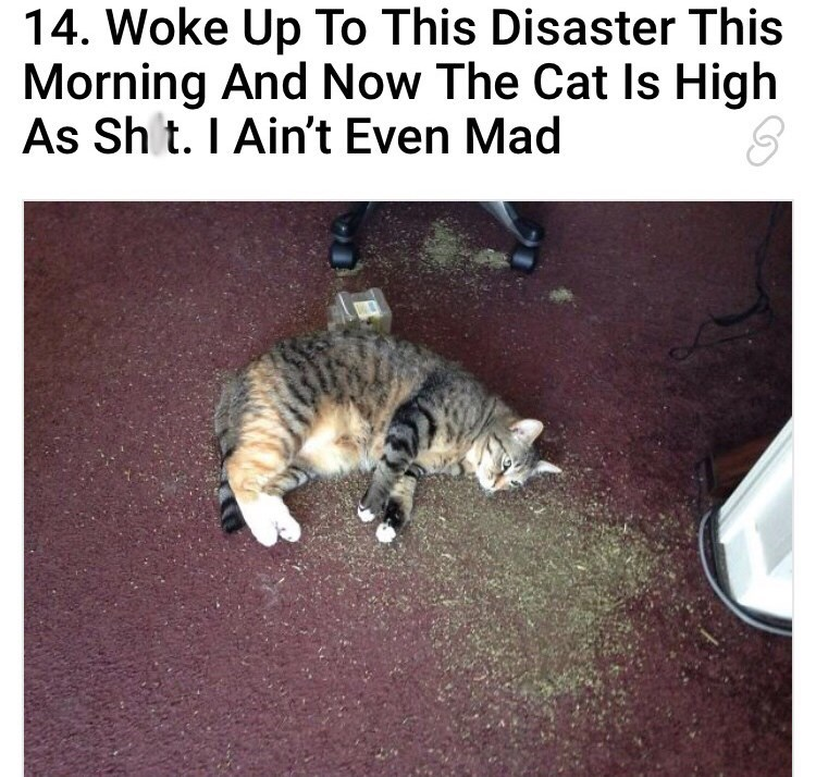 cat passed out on the floor with catnip spilled all over