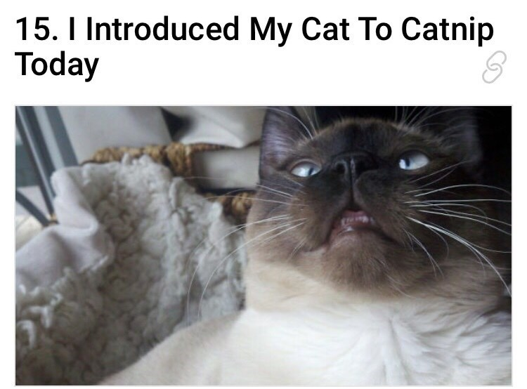 cat with a high expression after smelling catnip for the first time