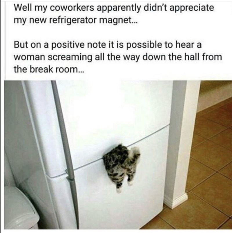 strange meme about scaring coworkers with fridge magnet of dismembered cat