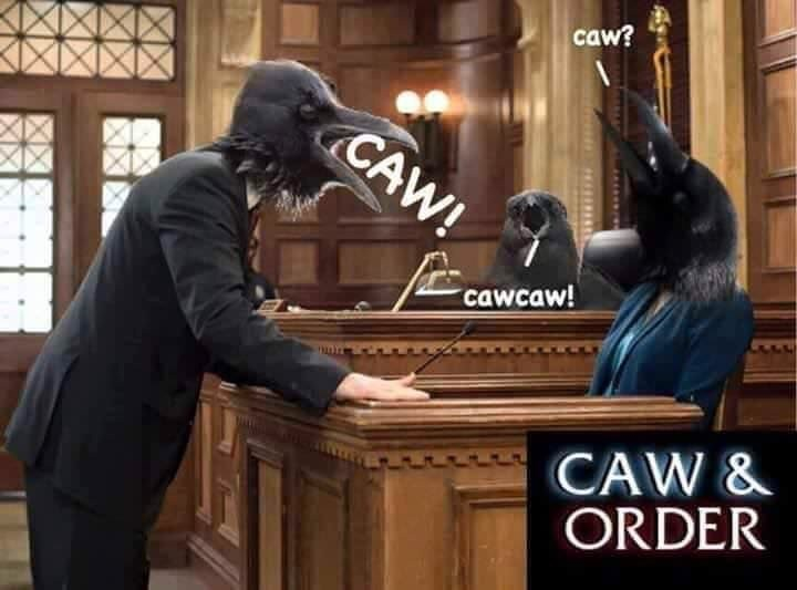 "strange meme parodying ""Law and Order"" with crows"