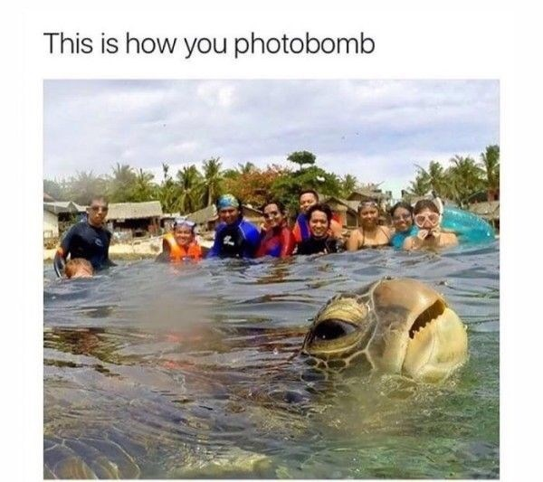 strange meme about turtle accidentally getting caught in group picture on the beach