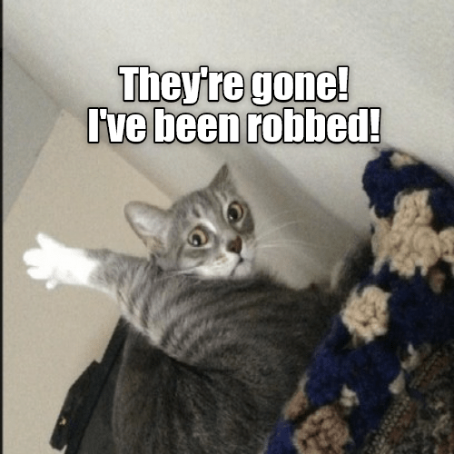 strange meme about cat finding out he's been castrated