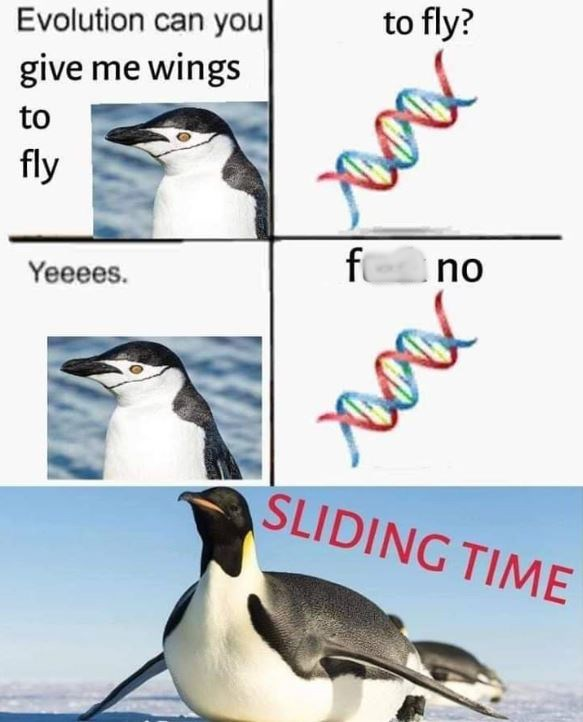 bird meme about evolution not giving penguins wings to fly so they slide instead