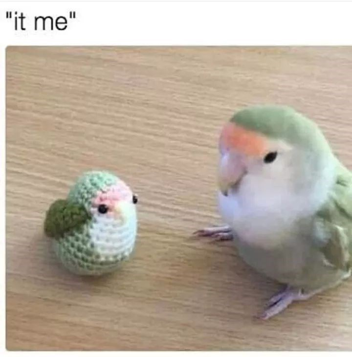 birb meme of small bird next to a tiny knitted version of it