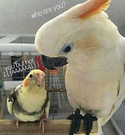 birb meme with big and small birds side by side