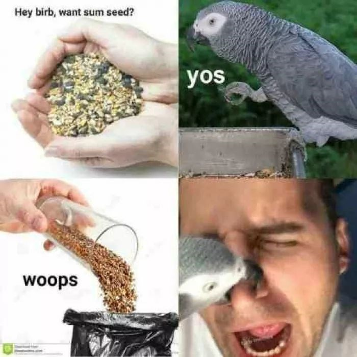 birb meme about offering bird seed then throwing it away, resulting in angry bird biting your nose
