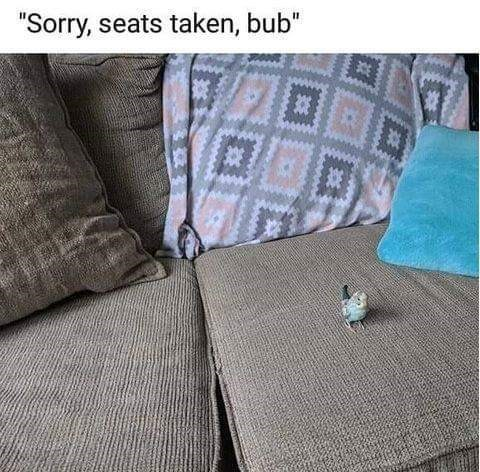 birb meme with picture of tiny bird taking up an entire sofa cushion