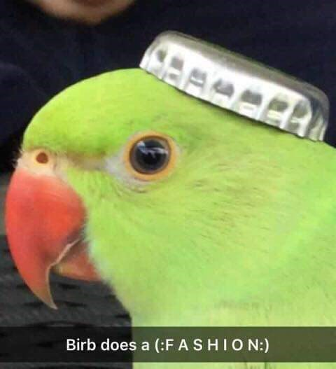 birb meme with picture of bird wearing a bottle cap as a hat