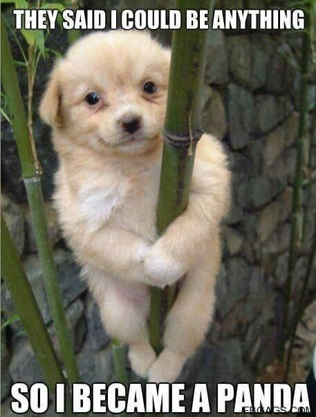 pic of puppy hanging around a bamboo like a panda