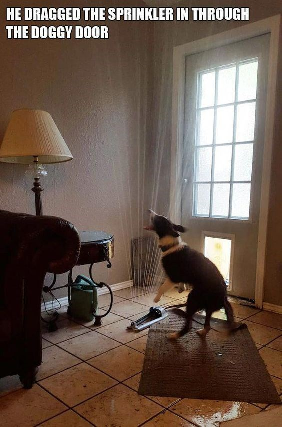 pic of dog playing with a water sprinkler indoors