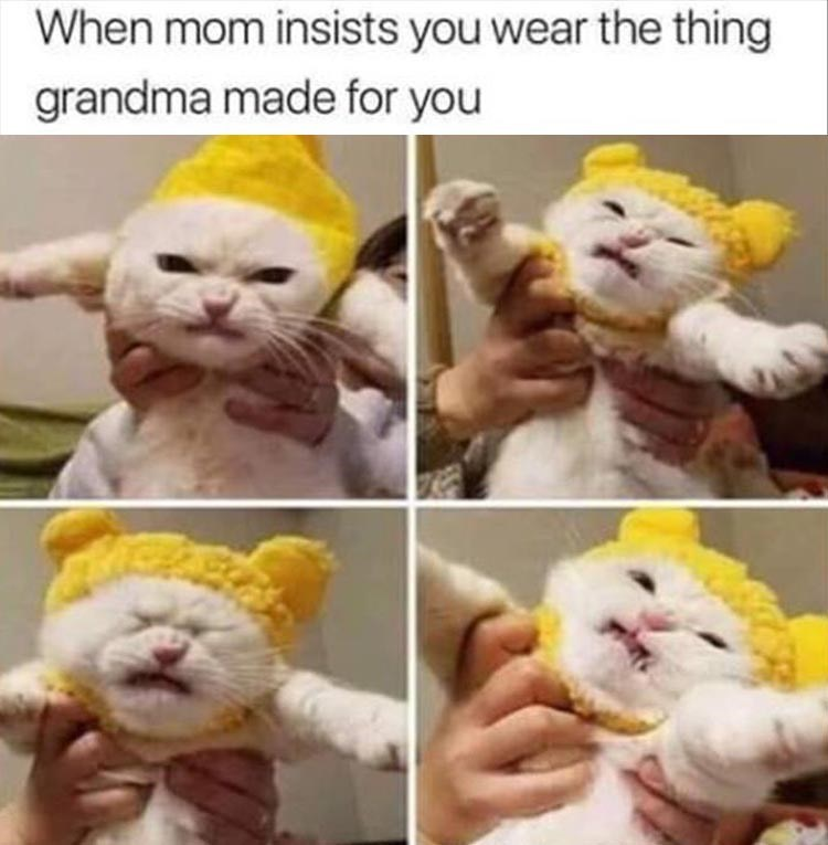 pics of grumpy cat being held while wearing a knitted hat