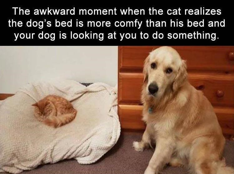 meme about a cat invading a dog's bed