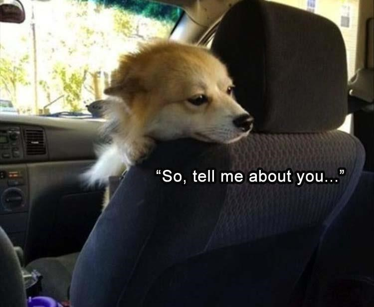 pic of dog staring back from the front seat and chatting with the passenger in the back