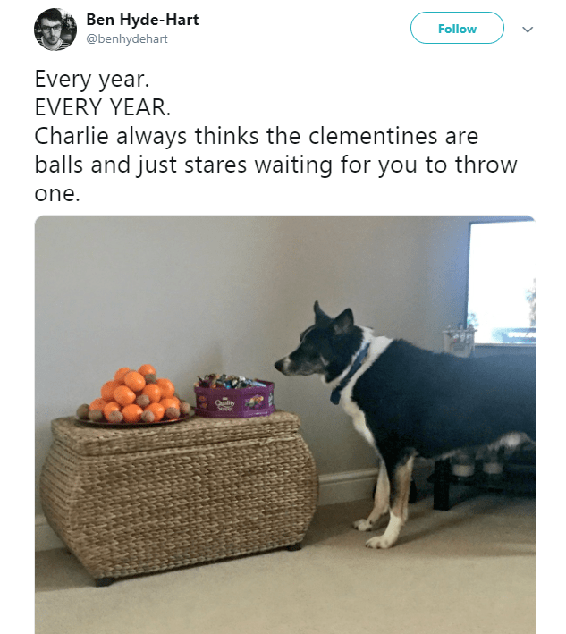 Product - Ben Hyde-Hart Follow @benhydehart Every year. EVERY YEAR. Charlie always thinks the clementines are balls and just stares waiting for you to throw one. Quality
