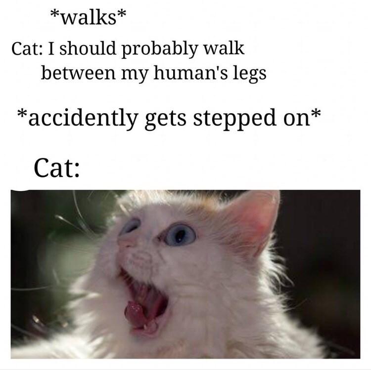 cat sad but true Cats - 9246187776