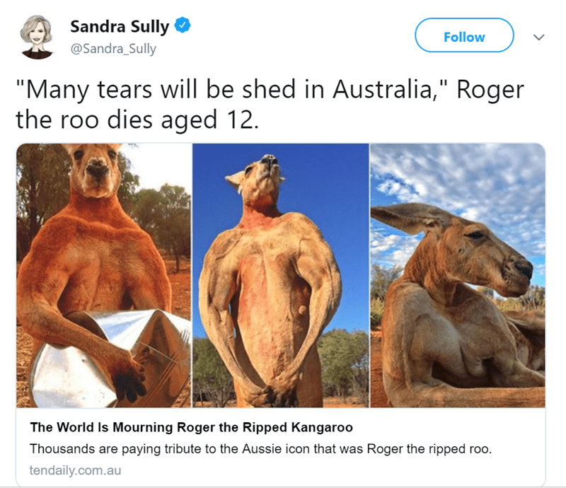 "Organism - Sandra Sully Follow @Sandra_Sully ""Many tears will be shed in Australia,"" Roger the roo dies aged 12. The World Is Mourning Roger the Ripped Kangaroo Thousands are paying tribute to the Aussie icon that was Roger the ripped roo. tendaily.com.au"