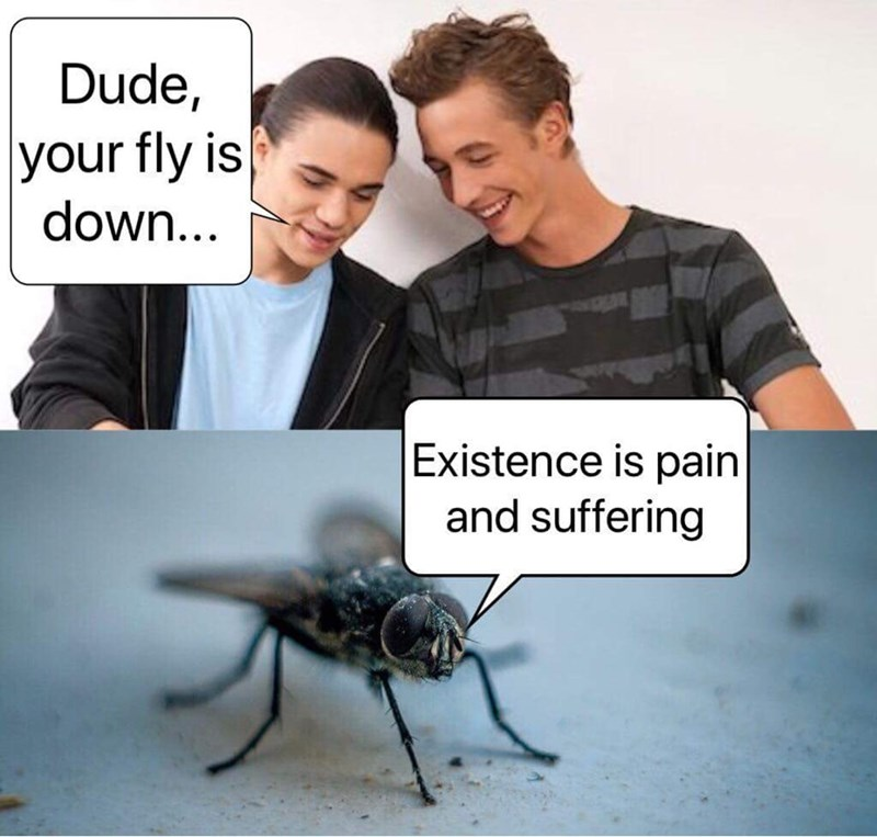 """pun abut the phrase """"your fly is down"""" meaning both that someone's zipper is open and that an insect is depressed"""