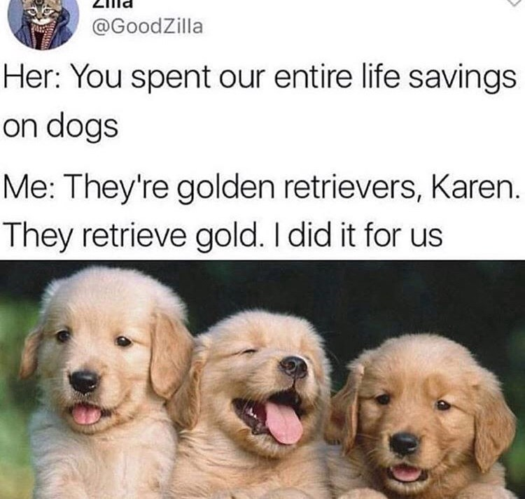tweet about investing money on a dog breed expecting it to return the investment with picture of golden retriever puppies