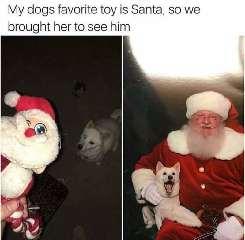 pic of a dog meeting santa