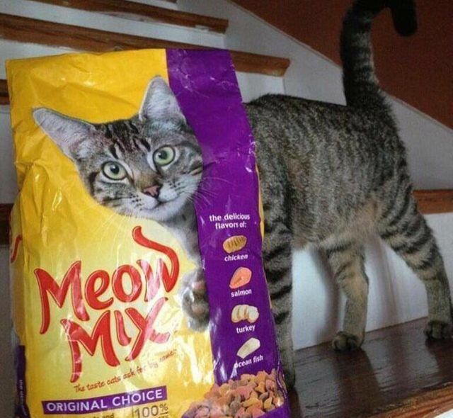 optical illusion - Cat - the delicious flavors of Mean chicken salmon turkey The taste cats ask f ORIGINAL CHOICE ecean fish 100% T
