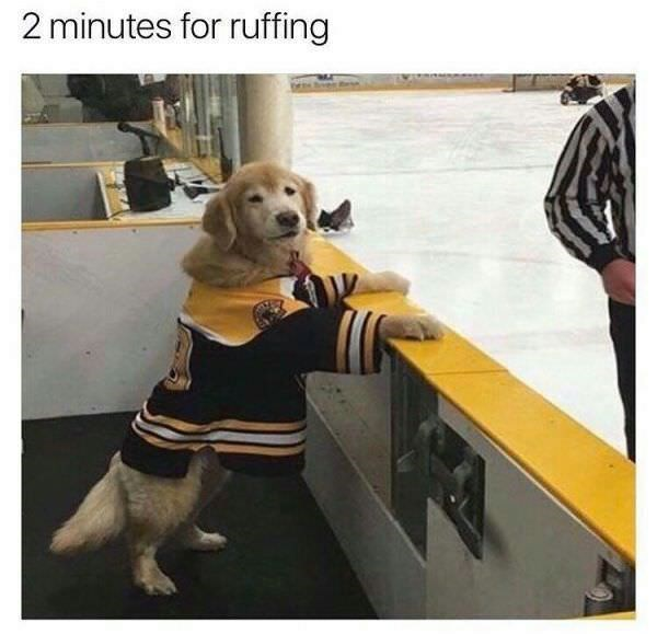 dog in a hockey jersey and taking over the referees job