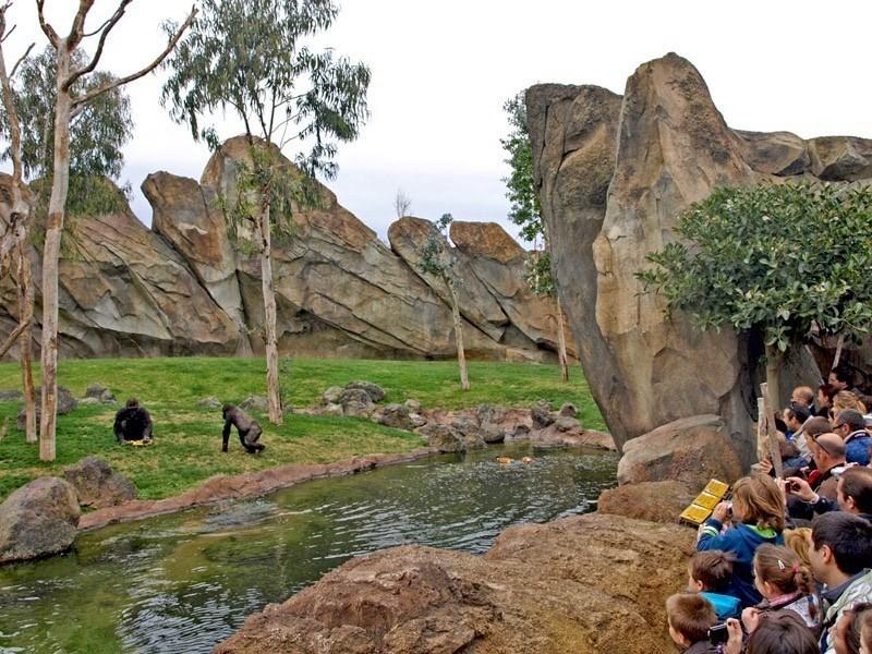 zoo where animals roam free