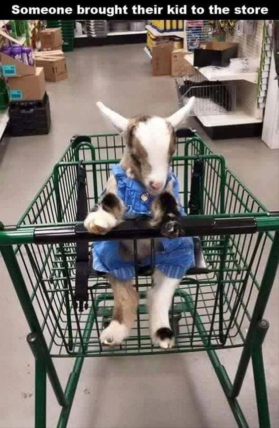 Canidae - Someone brought their kid to the store