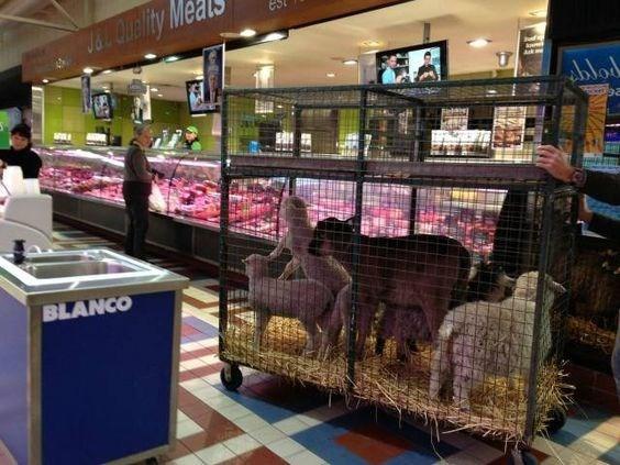 Retail - J&l Quality blod BLANCO